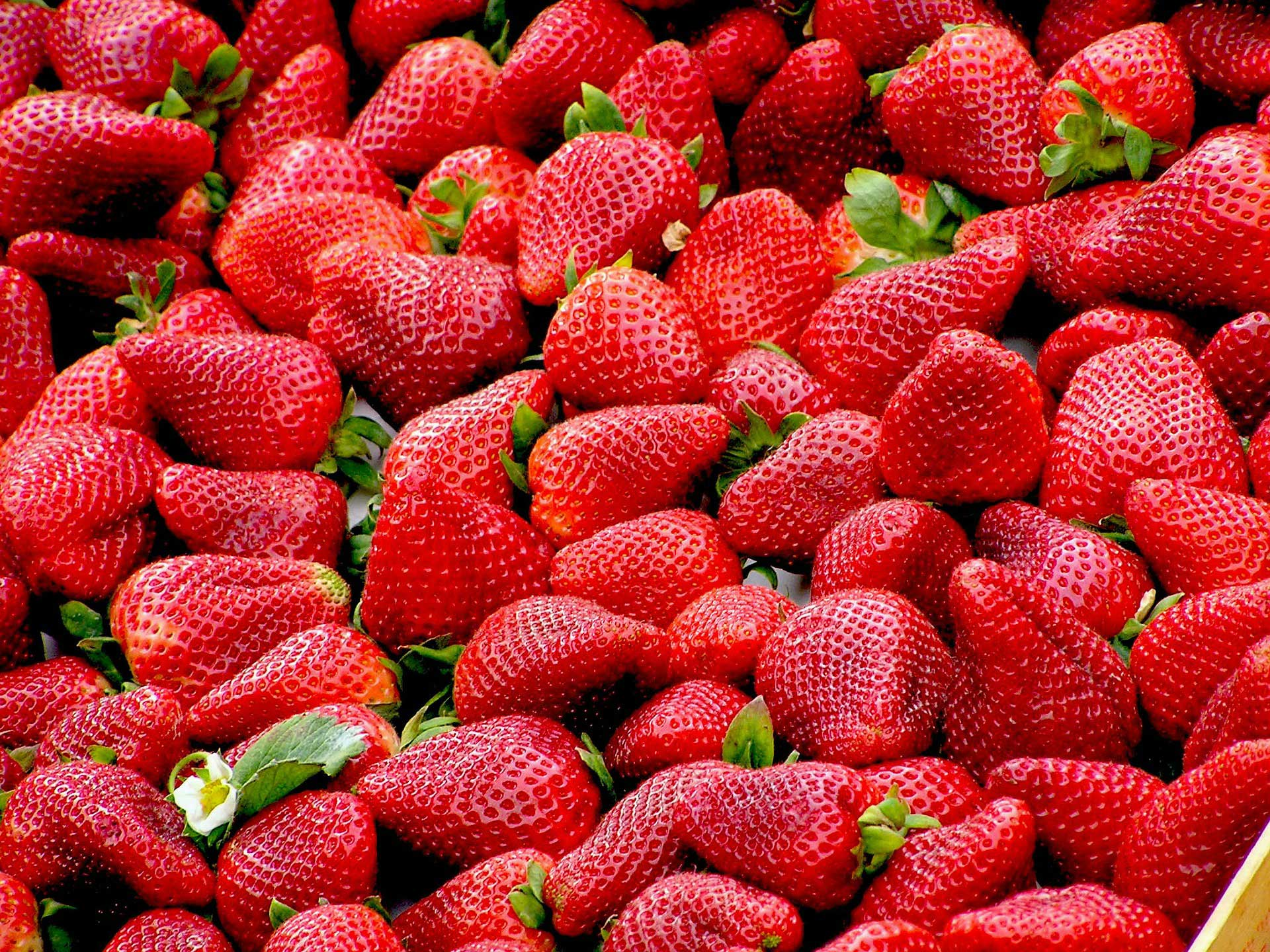 Sustainable Management of Strawberry Crops