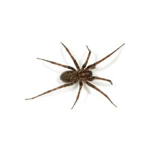 Spider and Crawling Insects