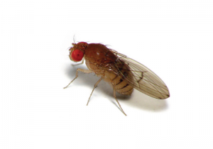Beer Fly