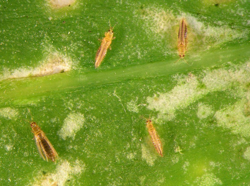 Pest information