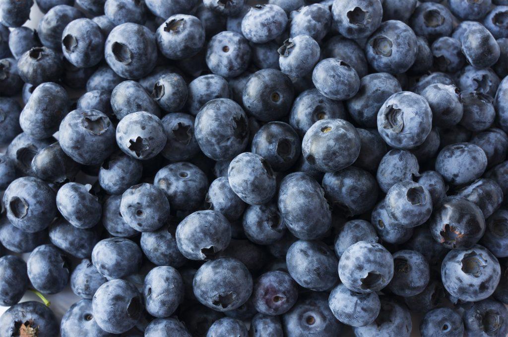 Blueberry Midge